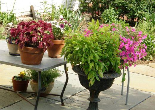 El cuidado de las plantas en otoño