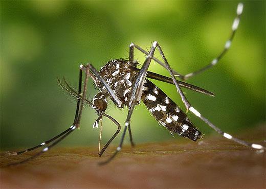 La ropa que repele mosquitos