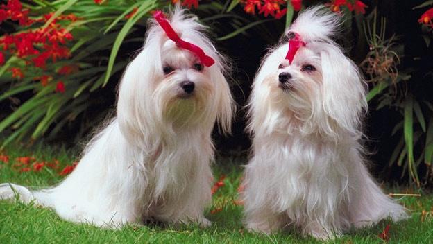 Plantas venenosas para los perros