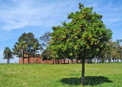 Argentina es el primer productor de limones a nivel mundial