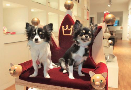 Los perros más ricos del mundo
