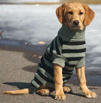 Cuidados de las mascotas en invierno