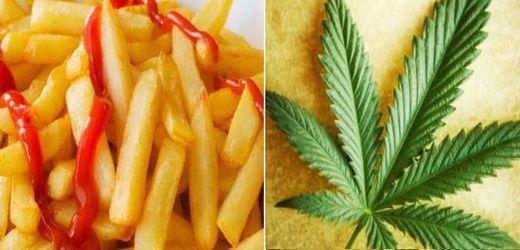Los alimentos grasos y la marihuana tienen efectos similares en el organismo