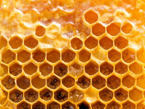 El propóleo, remedio de las abejas