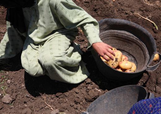 Más de 9 millones de niños en Latinoamérica realizan trabajos peligrosos