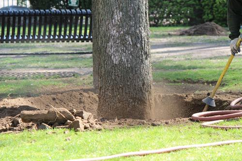 Cómo cortar las raíces malas
