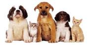 Censo de animales domésticos