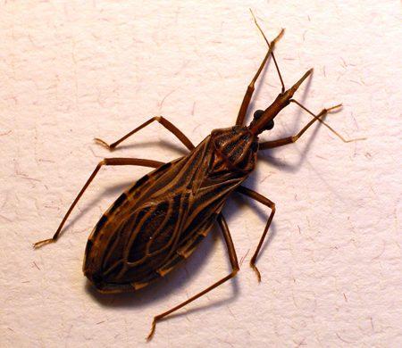 Mal de Chagas, entre la escasez y las promesas
