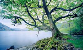 Cortando la raíz por la energía de la fe