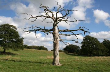 Corte al mal por la raíz