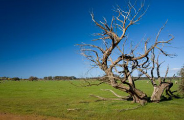Identifique su raíz negativa
