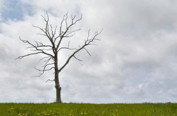 Plante una nueva raíz: cambie su fuente de confianza