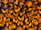 12º Día – Valle de huesos – Parte II
