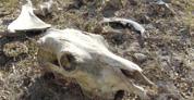 Sequía alarmante, pérdidas millonarias