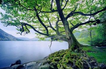 ¿Qué se necesita para ser un árbol que da buenos frutos?