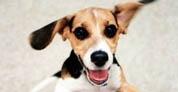 Perros hiperactivos, causas y soluciones