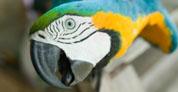 ¿Los papagayos hablan?