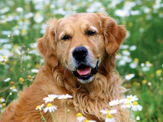 Los cuidados en la vejez de tu mascota