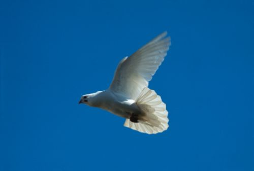 El Espíritu Santo y la fe sobrenatural