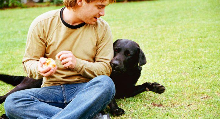 El mejor amigo del perro