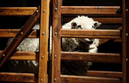 La oveja descarriada