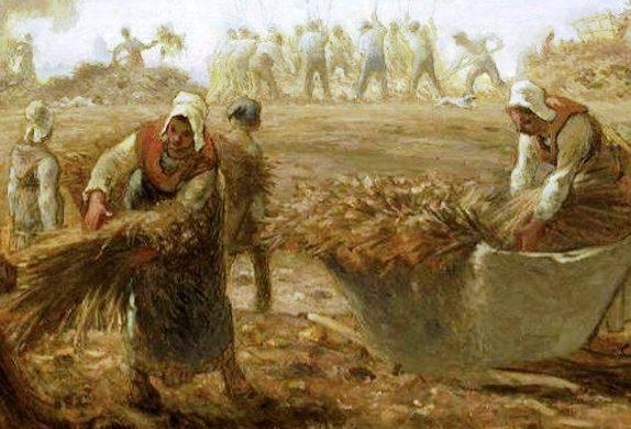 Costumbres de la Biblia – Separando la cizaña del trigo