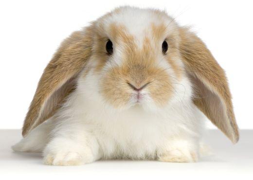 Mascota de la Semana: conejo