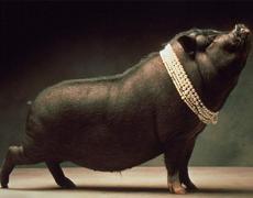 Perlas a Cerdos