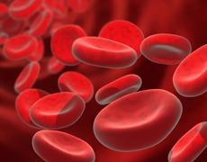 Mezcla de Sangres