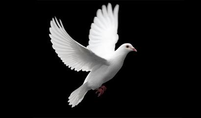 ¿Qué hacer para recibir el bautismo con el Espíritu Santo?