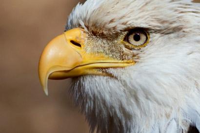 La visión del águila