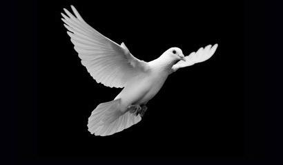 7 pasos para el Bautismo con el Espíritu Santo