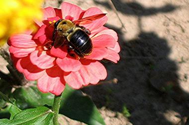 La abeja y los catedráticos