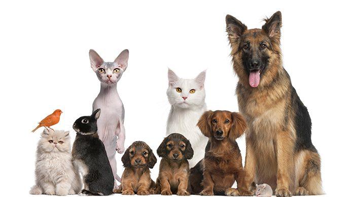 Mascotas: ¿qué enfermedades pueden transmitir?