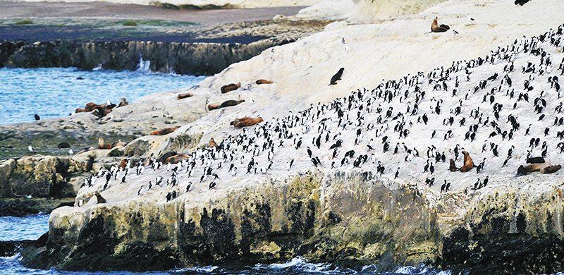 Puerto Madryn, contacto con la naturaleza