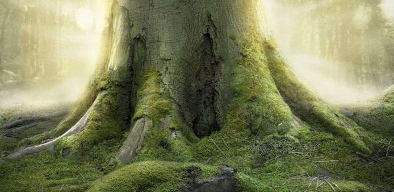 La única raíz que no puede ser arrancada