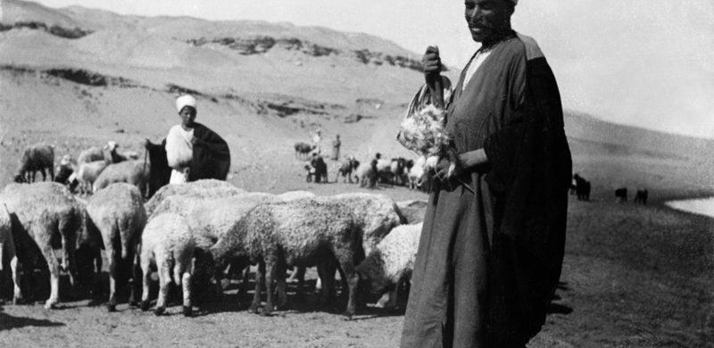 En búsqueda de la oveja perdida