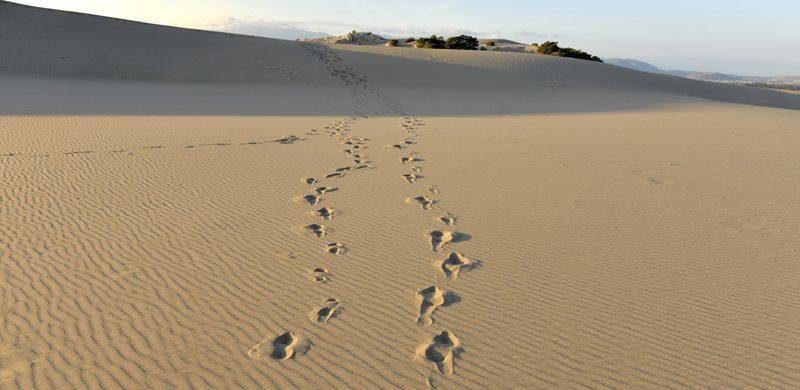 Usted no está solo en el desierto