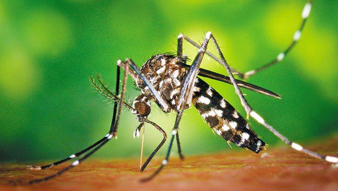 Chikunguña, una nueva amenaza