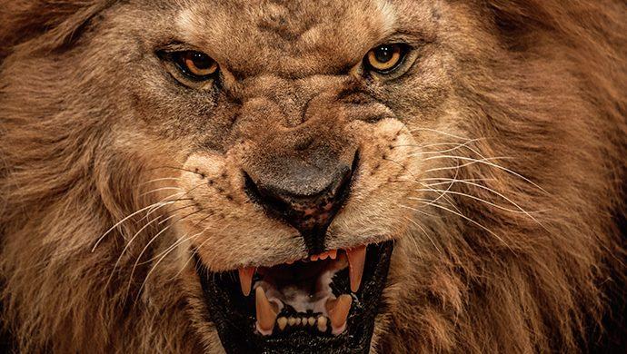 Vea cómo los hombres más poderosos de Babilonia conocieron la ira de un rey