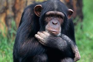 El mono y el broche para tender la ropa