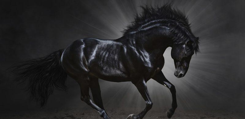 El Apocalipsis: el jinete del caballo negro