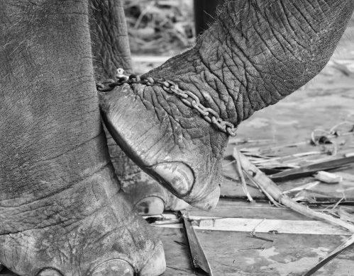 No somos como los elefantes