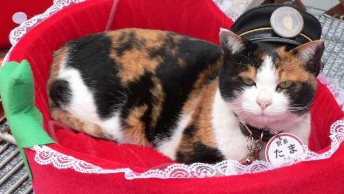 La gata que fue tratada como una diosa