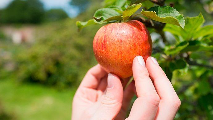 ¿Usted sabe la diferencia entre los dones y los frutos del Espíritu?