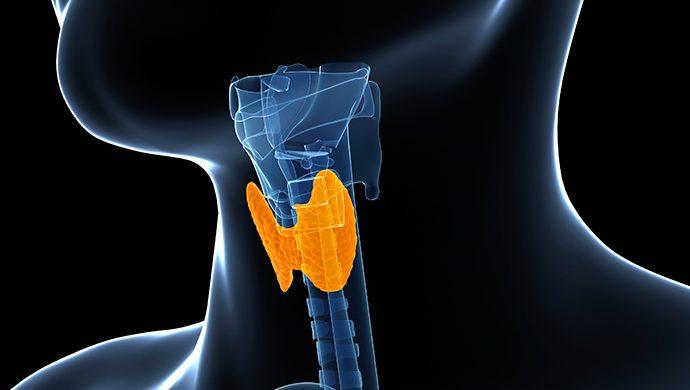 Tiroides, una glándula vital que puede tener problemas