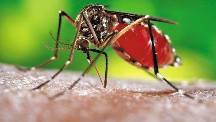 Pánico mundial por el zika