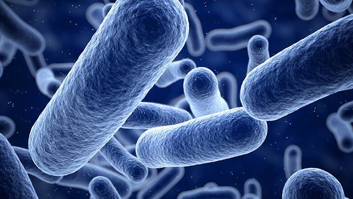 Superbacterias podrán matar a una persona cada 3 segundos en el mundo en el 2050