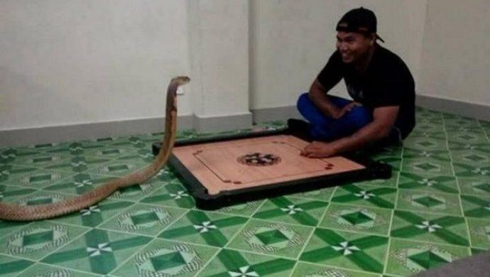 Hombre se casa con una cobra por creer que el animal es una reencarnación de la novia que murió