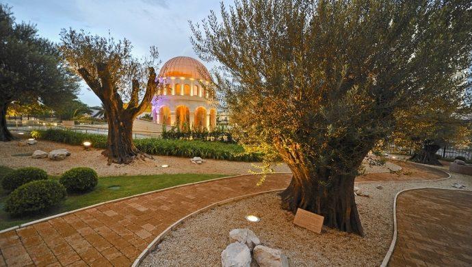 Los olivos en el Templo de Salomón